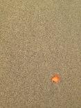 costarica_puertoviejo_beach