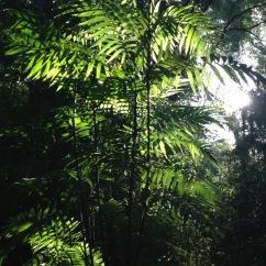 guatemala_tikal_junglecrossing-1